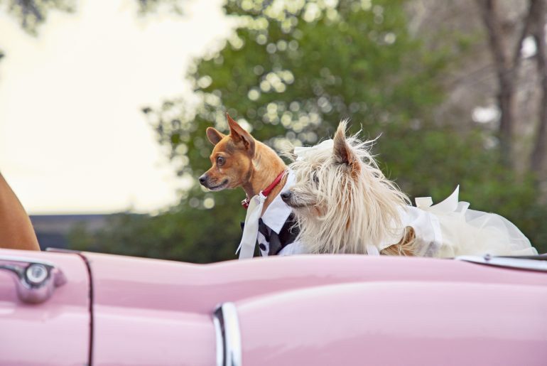 How to Include Your Pet In a Wedding